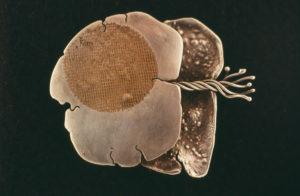 Seaform Brooch